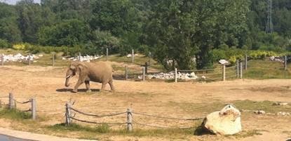 景点六:波兹南动物园